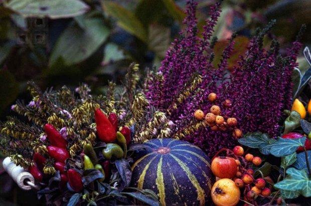 http://philluppus.deviantart.com/art/Autumn-Harve?offset=0#comments